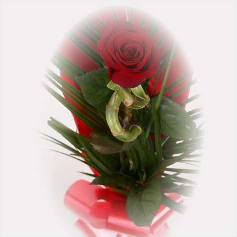 Single Kiss Red Rose & Lucky Bamboo-FREE DELIVERY