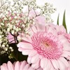 alternative image for Pink Lady Gerbera Bouquet-FREE DELIVERY
