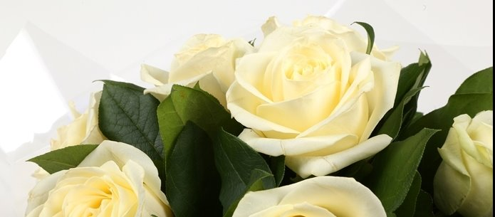 12 White Roses Bouquet - FREE DELIVERY
