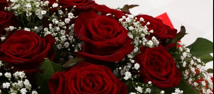12 Red Roses With Gypsophila-FREE DELIVERY