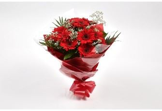 Red Glamour Gerberas-FREE DELIVERY