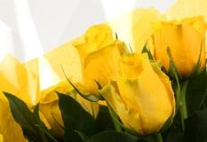 12 Yellow Roses Bouquet - FREE DELIVERY-Clear Savings-Clear Prices-Compare The Quaility