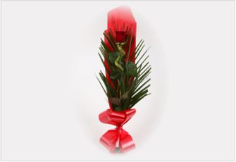 Single Kiss Red Rose & Lucky Bamboo - FREE DELIVERY