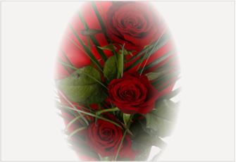 Trio Elegant Red Roses - FREE DELIVERY