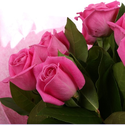 12 Pink Roses Bouquet Free Delivery Clear Savings Clear Prices