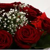 alternative image for 12 Red Roses With Gypsophila - FREE DELIVERY