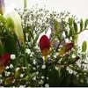 alternative image for Freesias & Gypsophila Bouquet-Clear Savings-Clear Prices-FREE DELIVERY