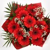 alternative image for Red Glamour Gerberas