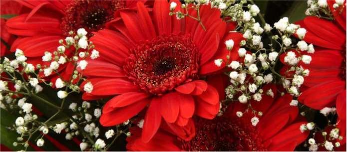 Red Glamour Gerberas