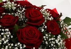 24 Red Roses With Gypsophila - FREE DELIVERY